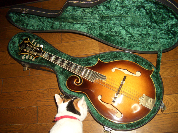 Blue Bell's Flat Mandolin F-8(1978) by Cato in Cato's unbelievably great gear collection