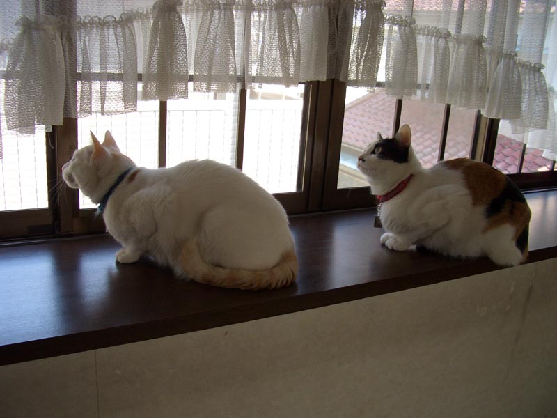 Cats Watching Sparrows by Cato in my cats