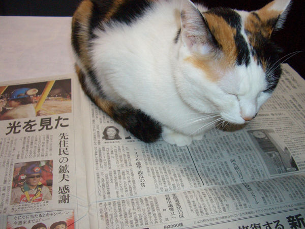 Cherry On Newspaper by Cato in my cats